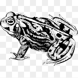 Black and white vector material frog, Frog, Toad, Animal PNG and Vector - Toad PNG Black And White