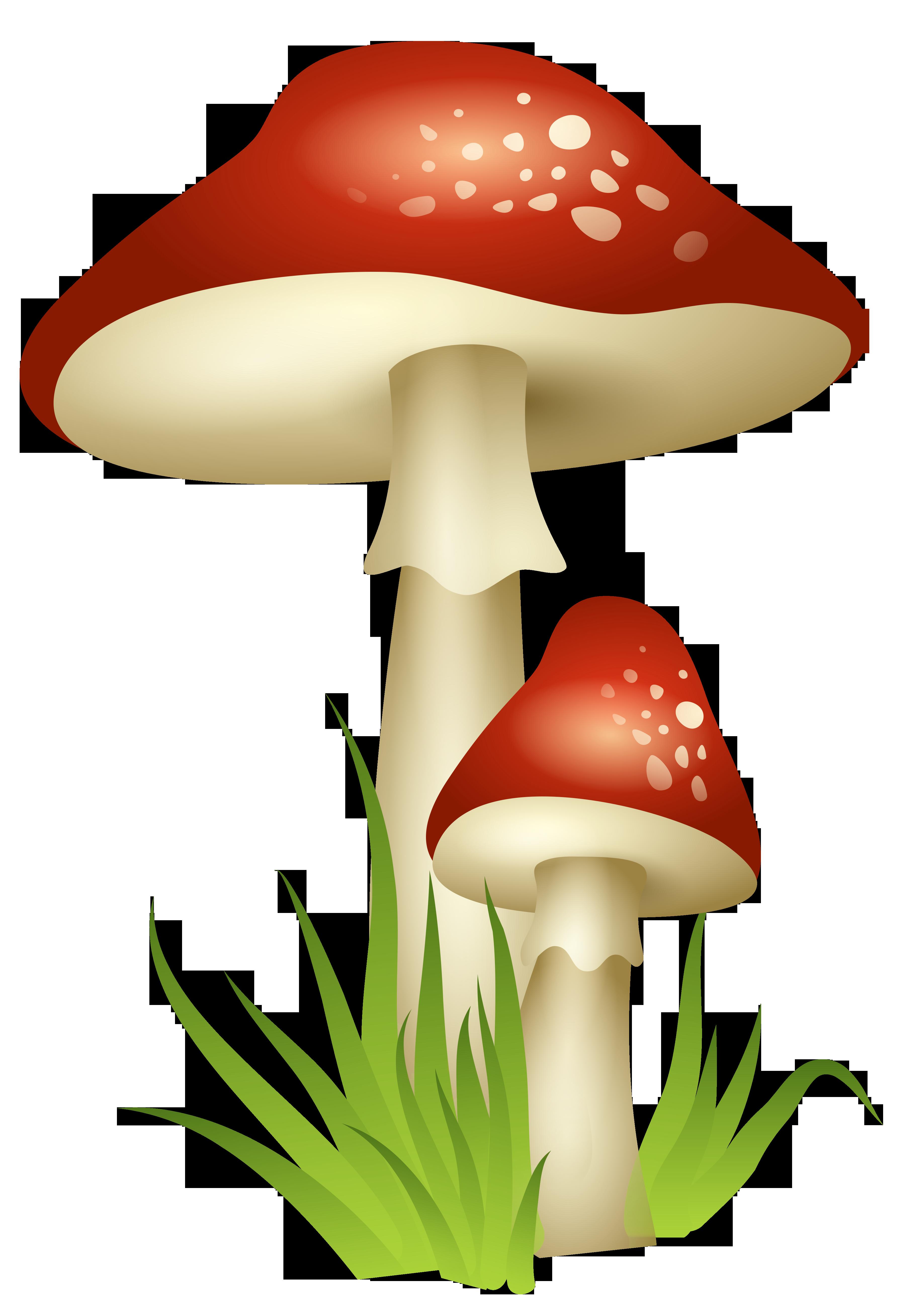 Mushroom clipart transparent background #9 - Toadstool PNG HD