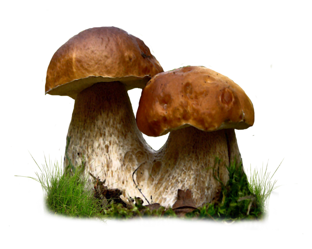Mushroom Png by Moonglowlilly PlusPng.com  - Toadstool PNG HD