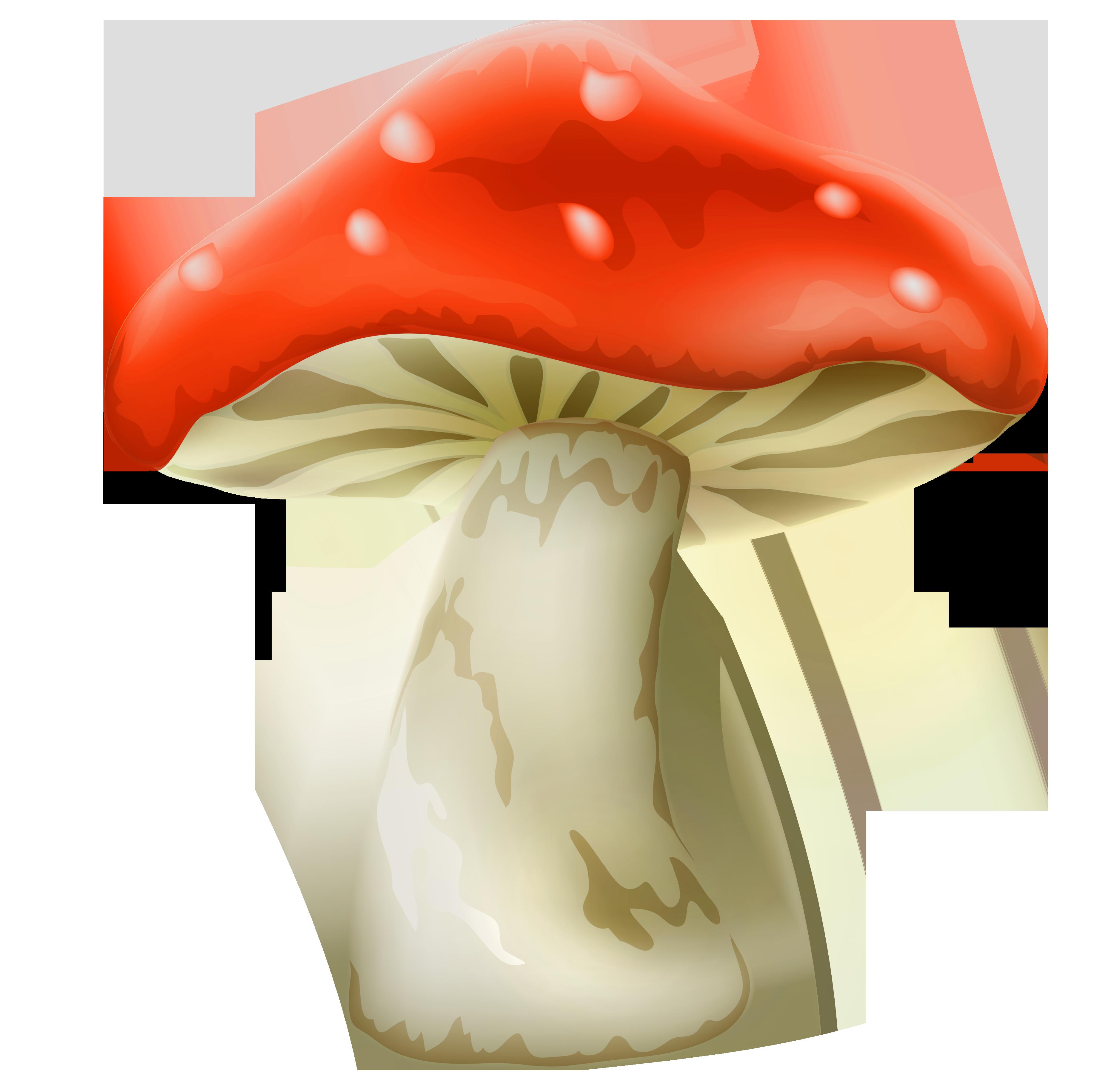 pin Mushroom clipart red mushroom #1 - PNG Toadstool - Toadstool PNG HD