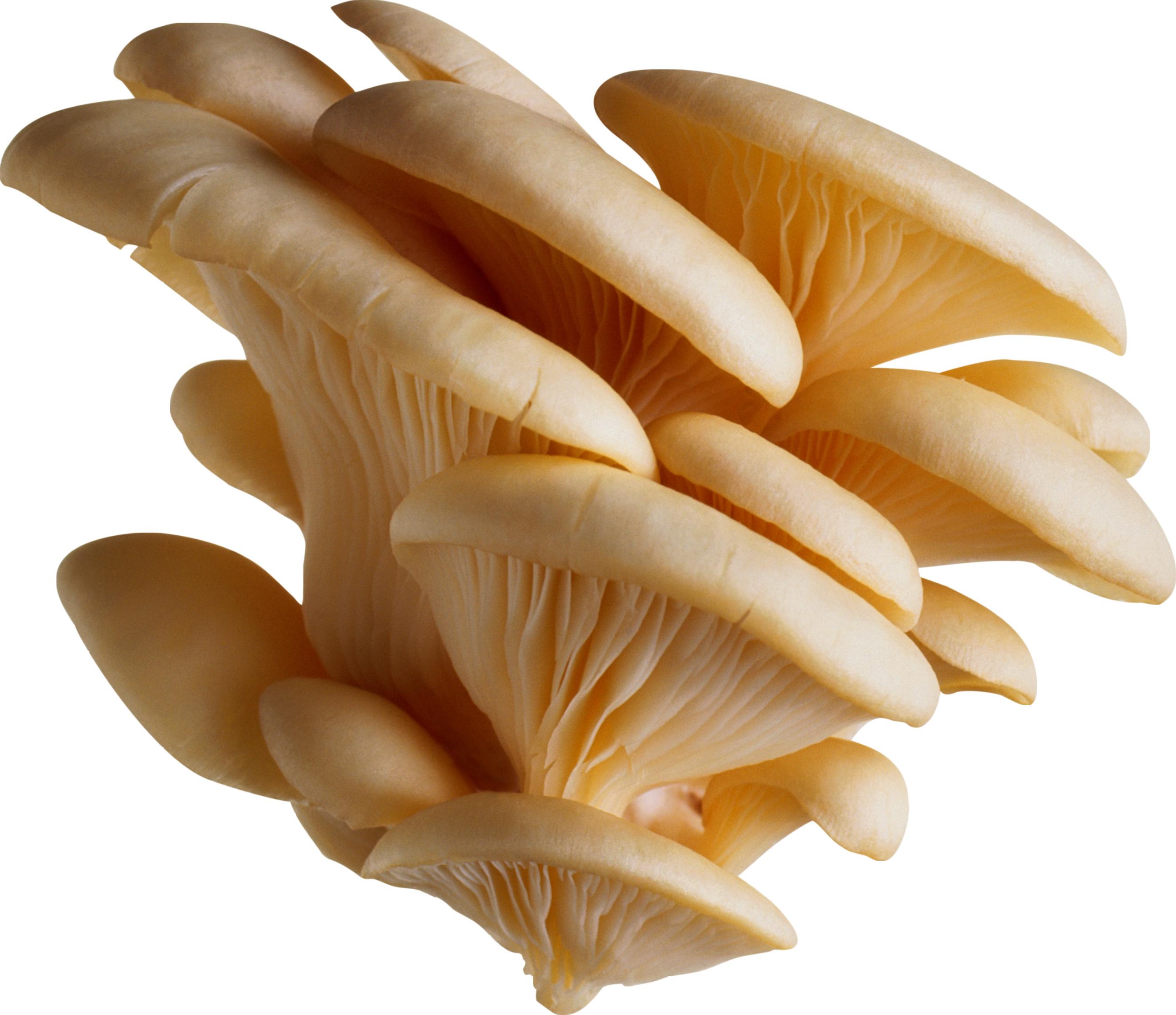 White mushrooms PNG image - Toadstool PNG HD