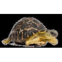 Tortoise PNG - 7216