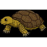Tortoise PNG - 7212