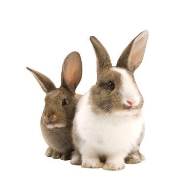 Transparent Pet Bunny Rabbit PNG - Rabbit PNG