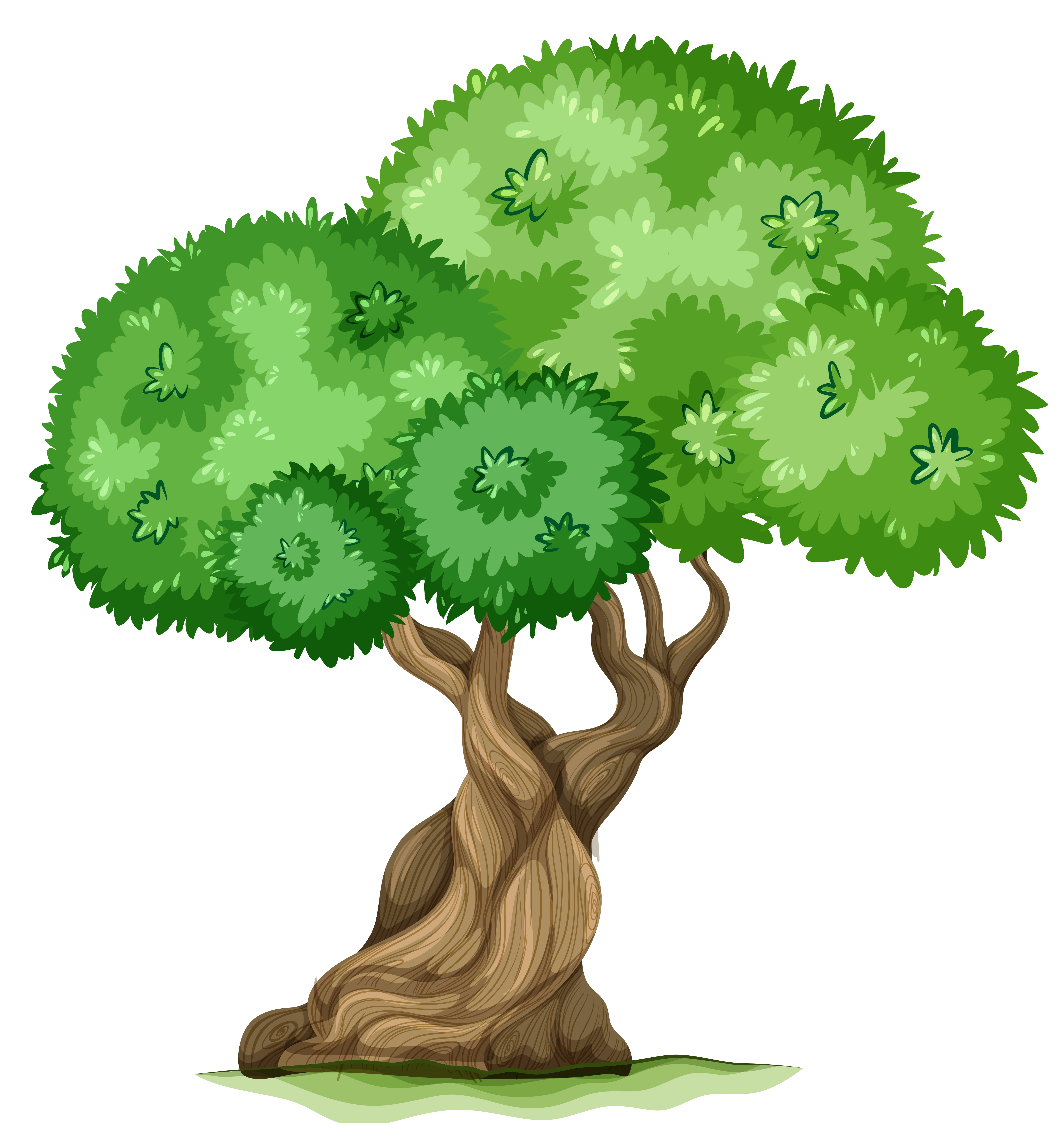 Tree Clipart PNG - 77191