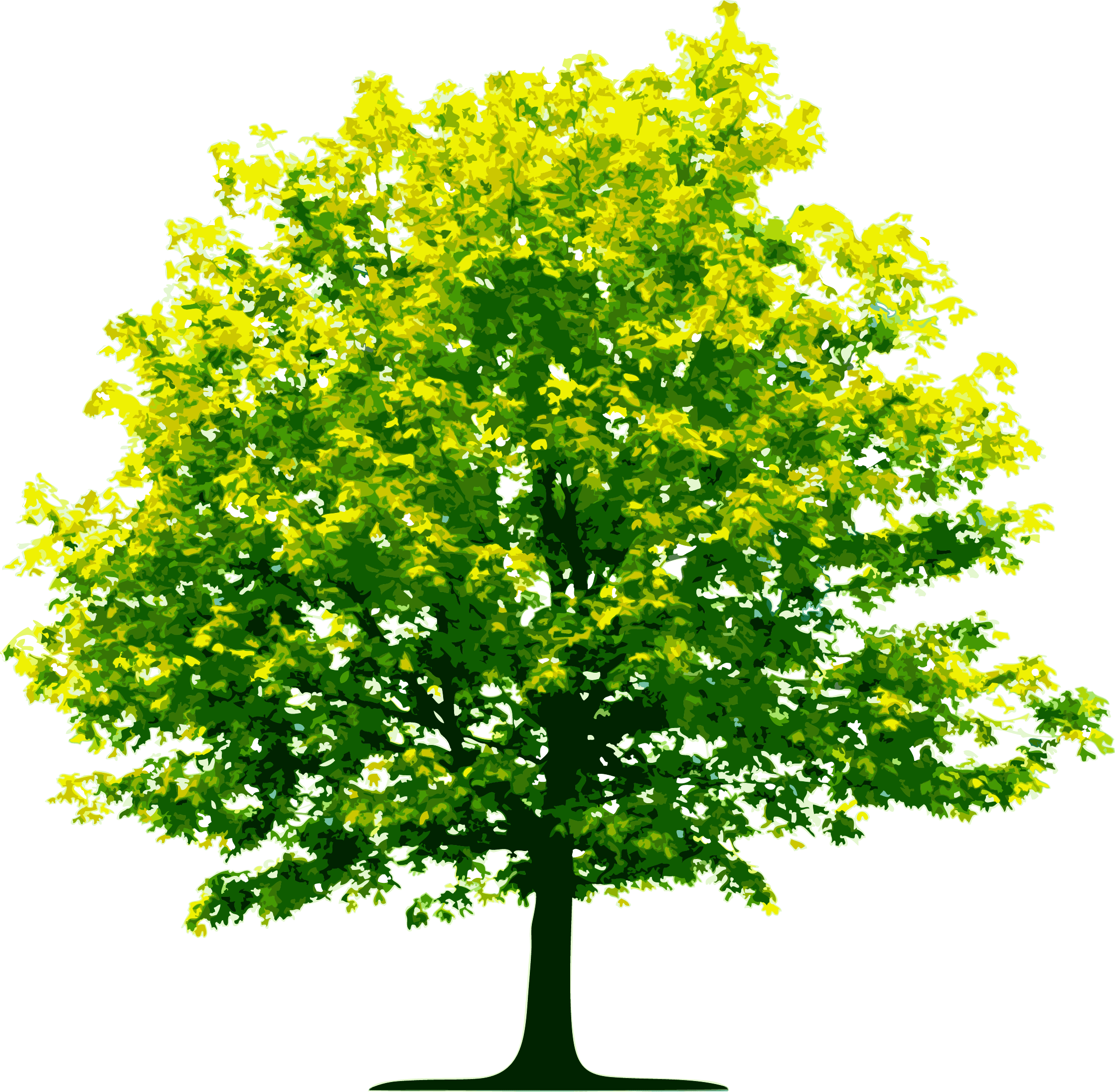 Tree Png Image Download Picture PNG Image - Tree Clipart PNG