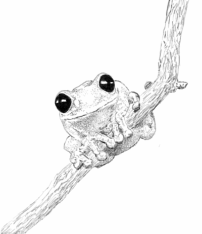 black and white tree frog by SparkyWonKenobi PlusPng.com  - Tree Frog PNG Black And White
