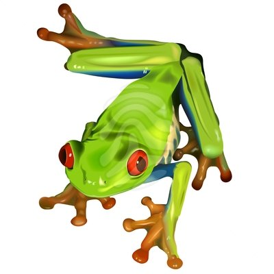 Clipart Info - Tree Frog PNG Black And White