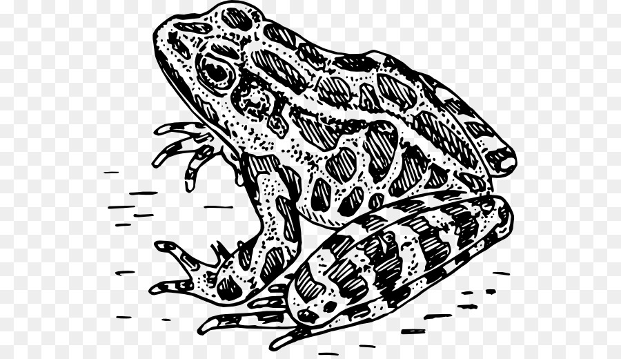 Frog Amphibian Black and white Clip art - Bumpy Frog Cliparts - Tree Frog PNG Black And White