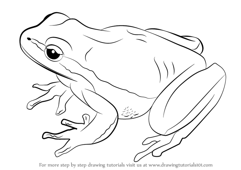 How to Draw a Lemon-Yellow Tree Frog - Tree Frog PNG Black And White