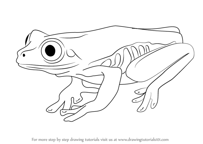 Learn How to Draw a Tree Frog (Amphibians) Step by Step : Drawing Tutorials - Tree Frog PNG Black And White