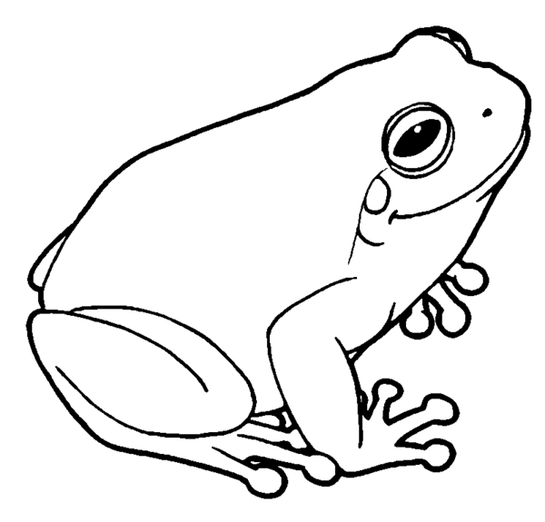 Tree frog by MisterBug PlusPng.com  - Tree Frog PNG Black And White