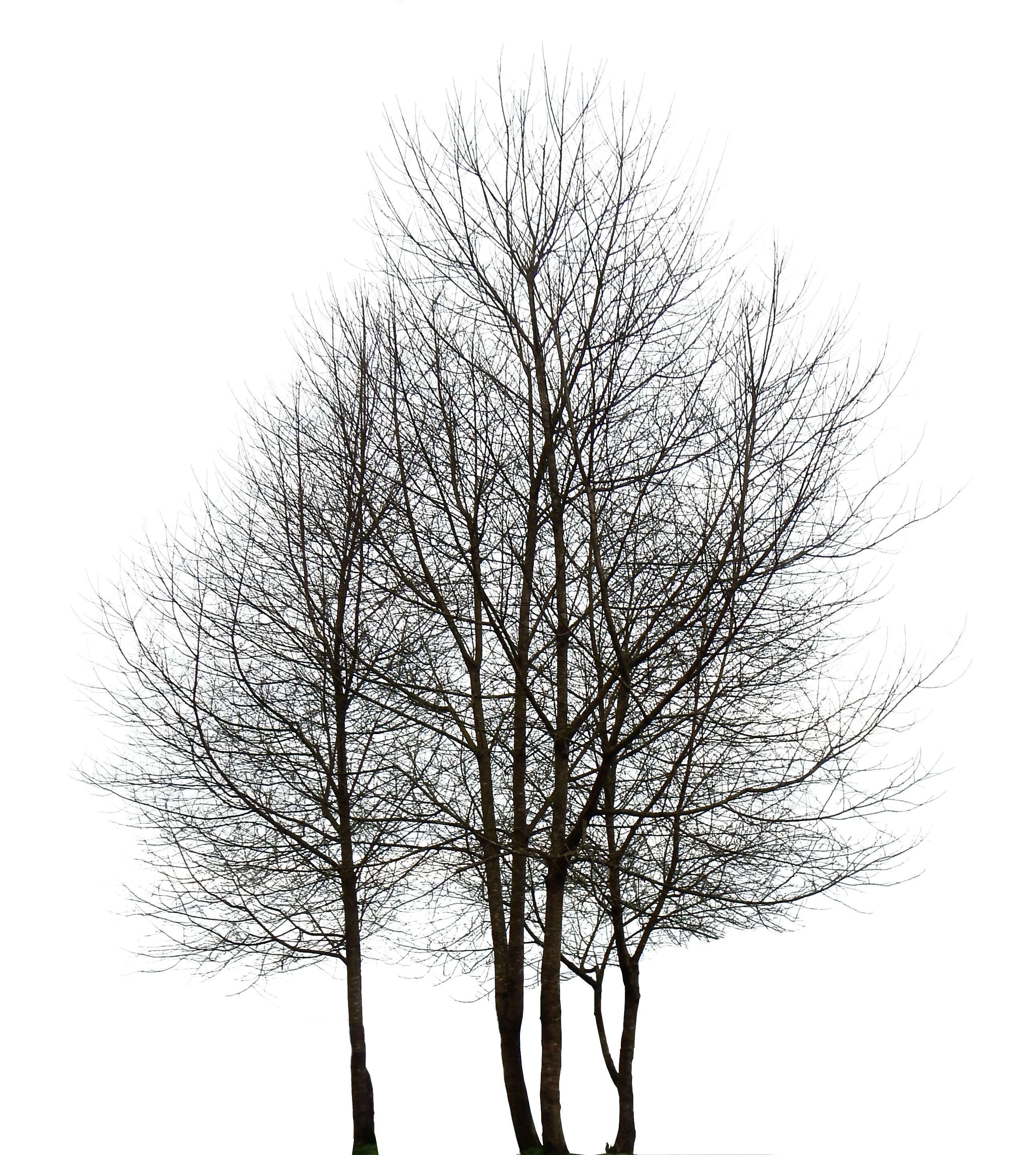 Download HD Large - Tree HD PNG