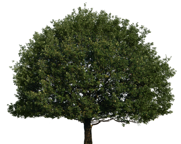 gd08 39 5 Tree 51 png by gd08 - Tree HD PNG