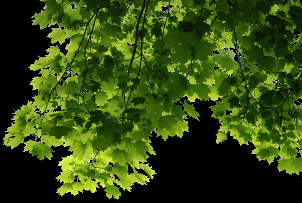 HD Tree Leaves Render By 3FixR PlusPng.com  - Tree HD PNG