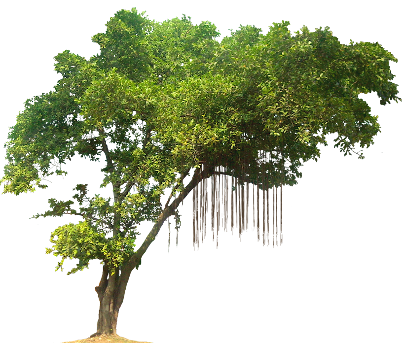 Jungle Tree PNG Image - Tree HD PNG