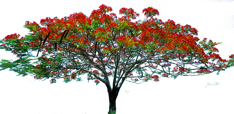 Pin Red Flower Clipart Flower Tree #1 - Tree HD PNG