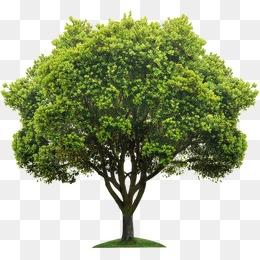 Tree, Tree, Trees PNG Image - Tree HD PNG