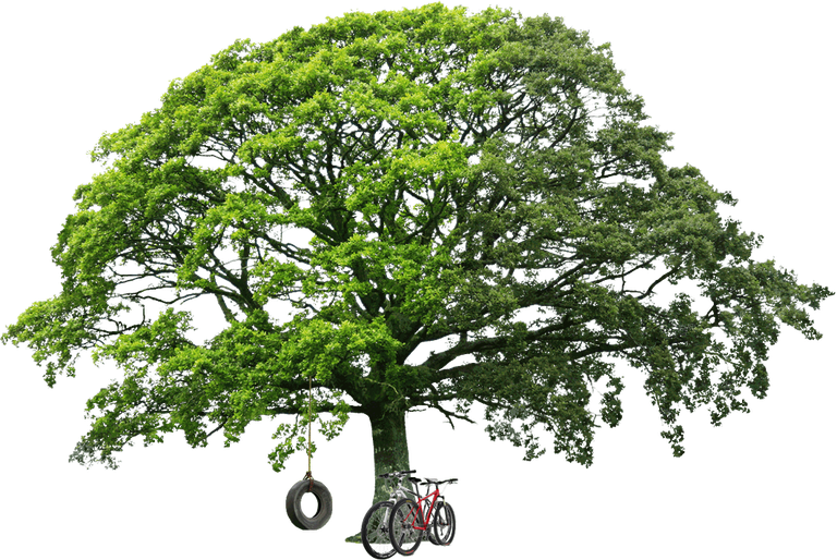 ZIP File Link Is In The End Of The Post. - Tree HD PNG