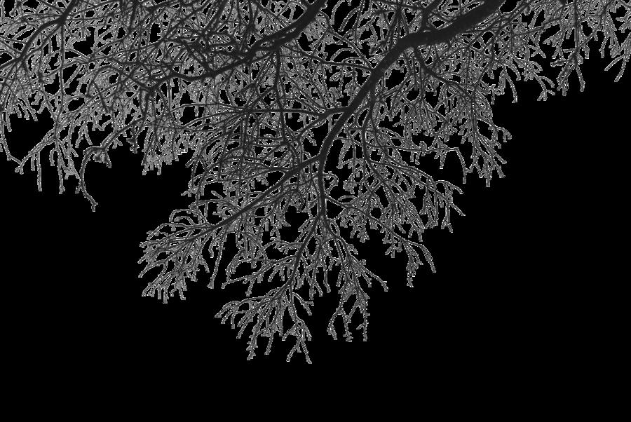 Tree Limb PNG - 88734