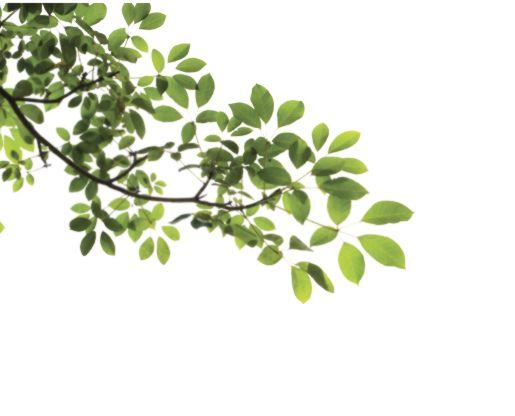 Tree Branch PNG Transparent I