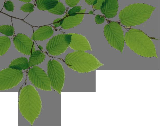 Tree Limb PNG - 88726