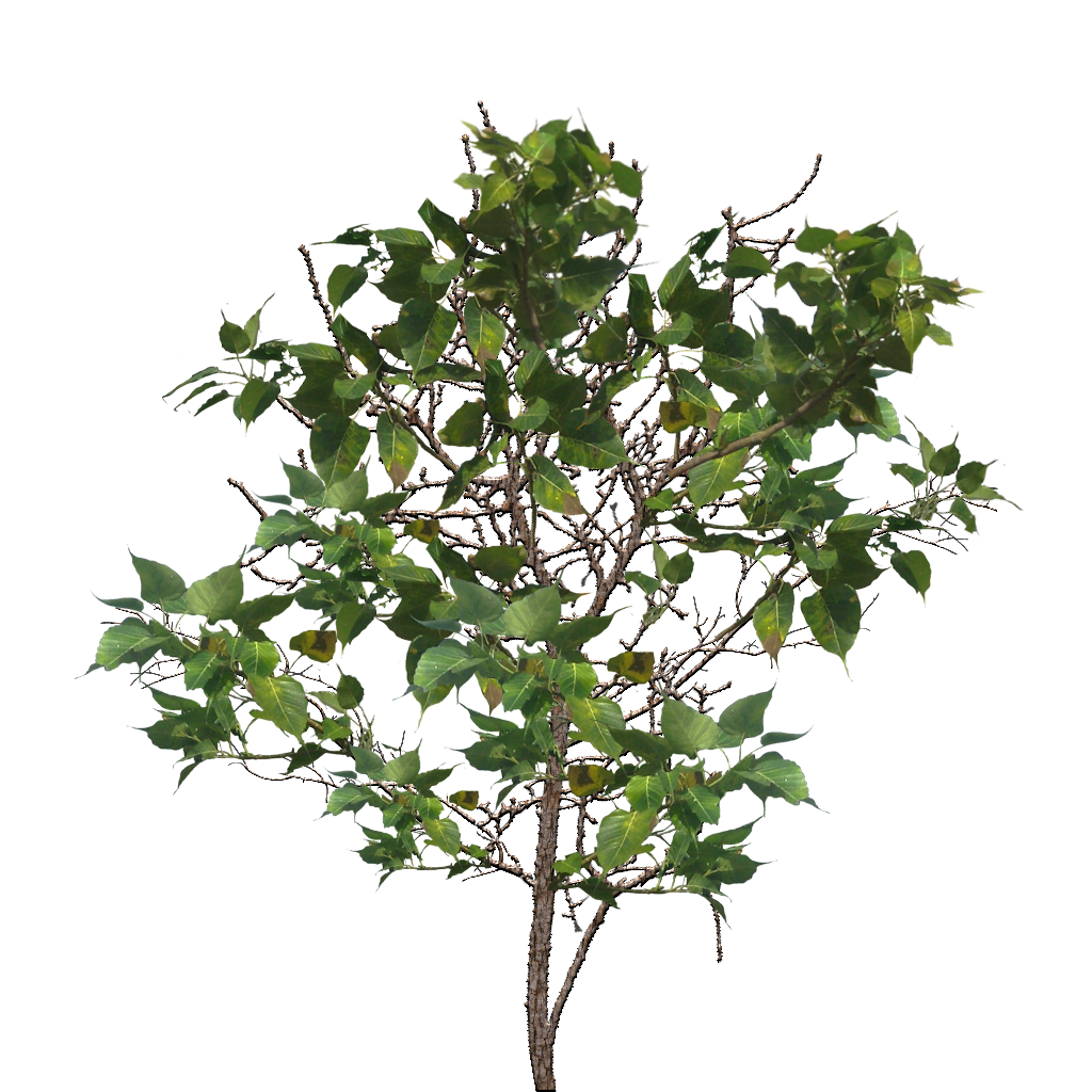 Tree Branch PNG Image - Tree Limb PNG