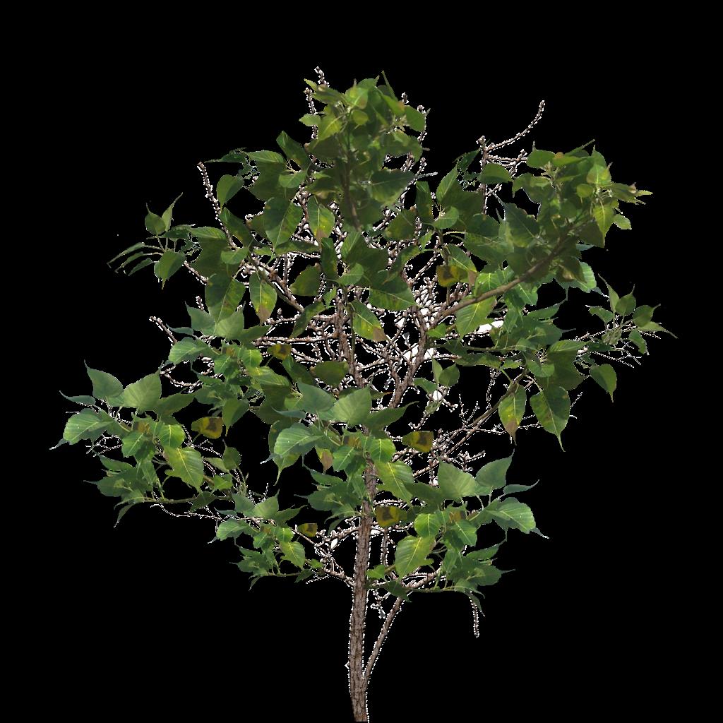 Tree Limb PNG - 88732