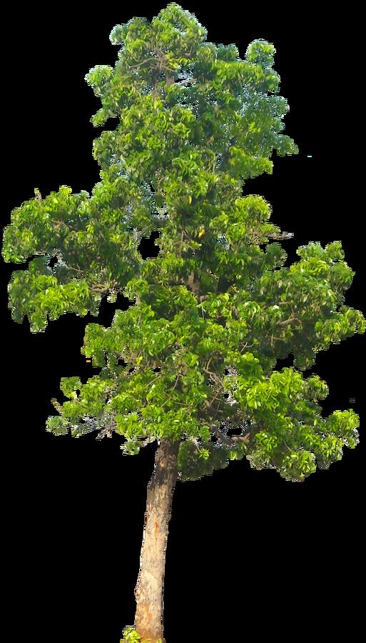 20 Free Tree PNG Images - Mahogani05L - Tree PNG