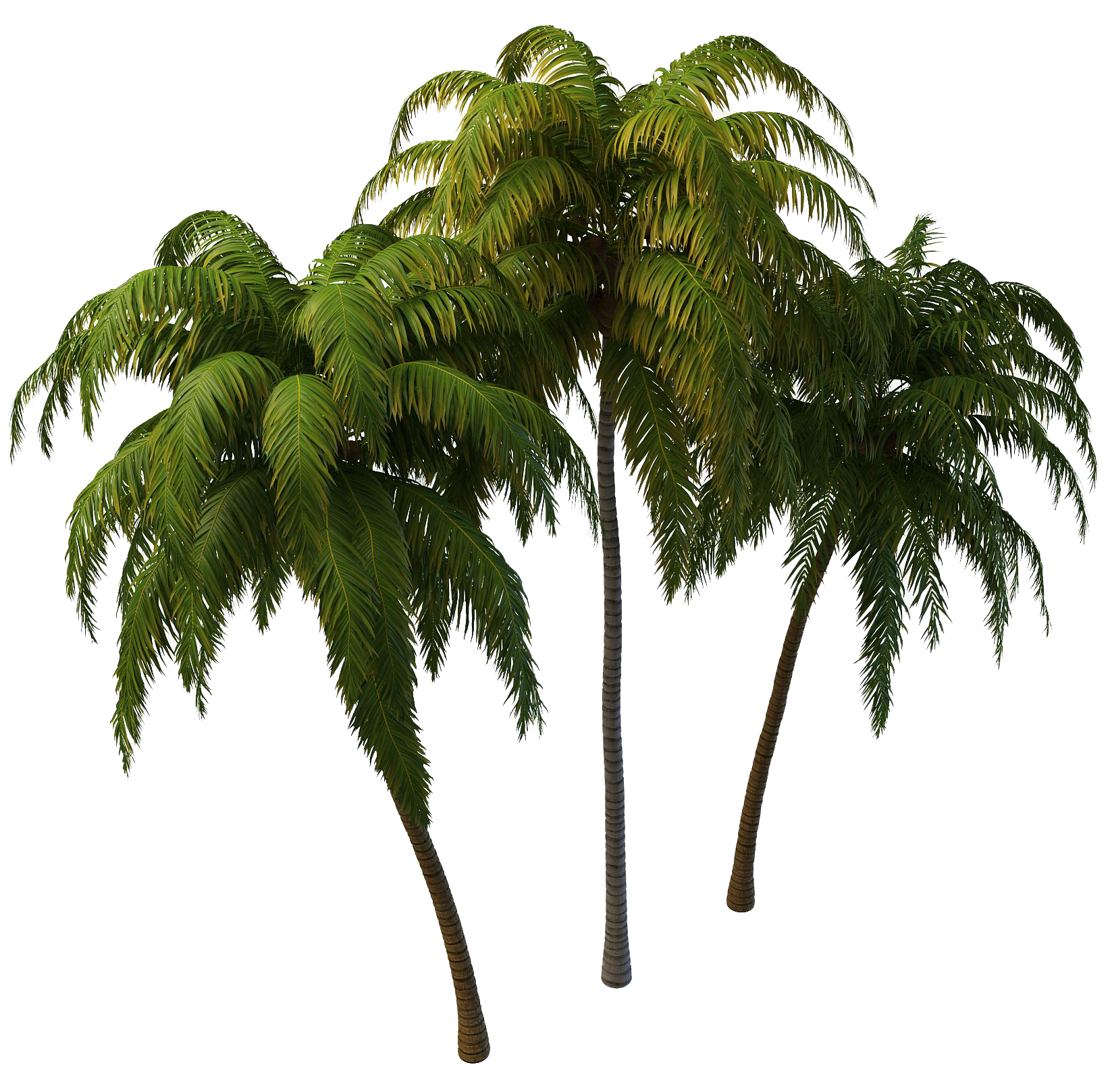Coconut Tree PNG Photos - Tree PNG