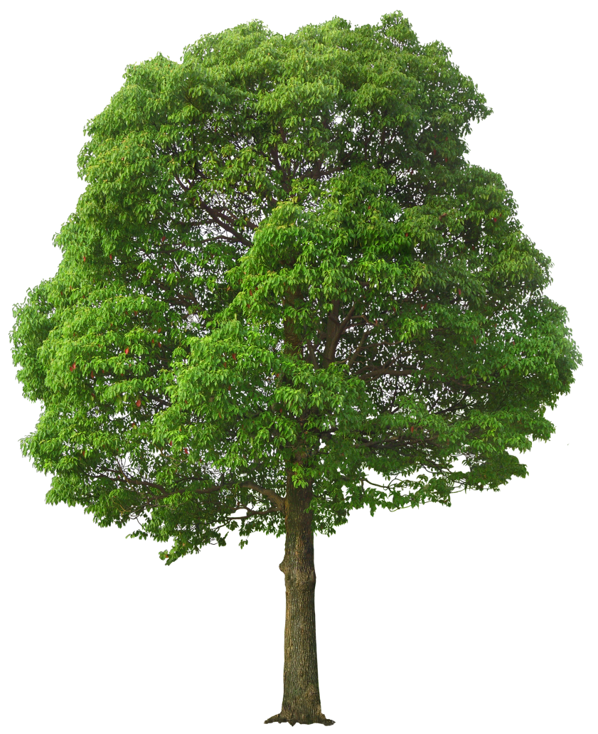 Large_Green_Tree_PNG_Picture.png (841×1032) - Tree PNG