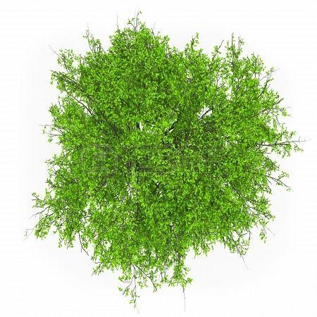 18764210-tree-top-view.jpg (450×450) - Tree PNG Top View