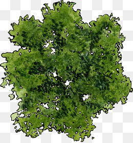A top view of a green tree, T