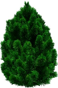 Pine Tree PNG By Dbszabo1 On DeviantArt - Tree PNG Top View