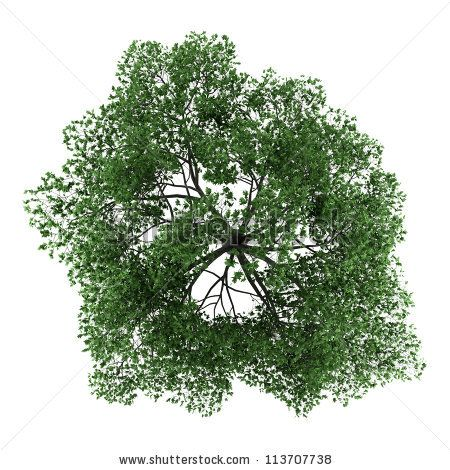 Stock Images Similar To ID 109888955 - Top View Of Umbrella Tree. - Tree PNG Top View
