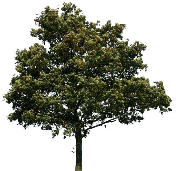 Tree Png Image Download Picture PNG Image - Tree PNG