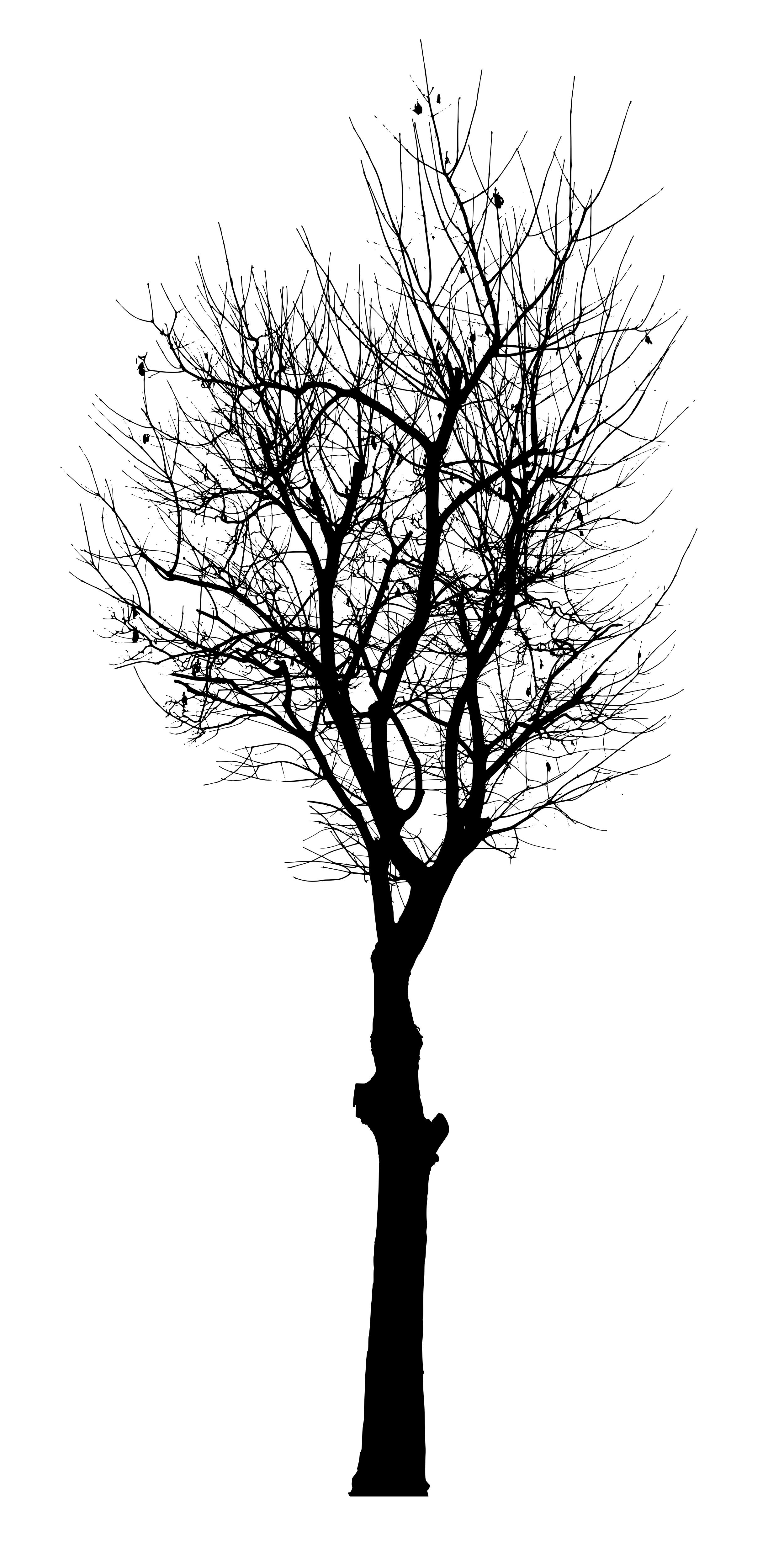 Tree PNG Vector - 56472