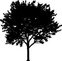 Tree PNG Vector - 56475
