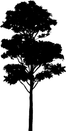 Tree Silhouette, Silhouette of Plant, Tree Vector, Tree Image, Tree PNG,  Silhouette of PlusPng.com  - Tree PNG Vector