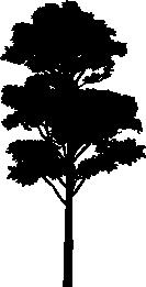 Tree PNG Vector - 56476