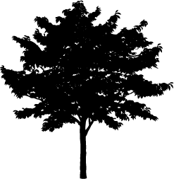Tree Silhouette, Silhouettes of Tree, Tree Vector, Tree Shape, Tree PNG,  Tree AI, Trees Image, Tree Images PlusPng.com  - Tree PNG Vector