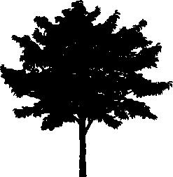 Tree PNG Vector - 56474