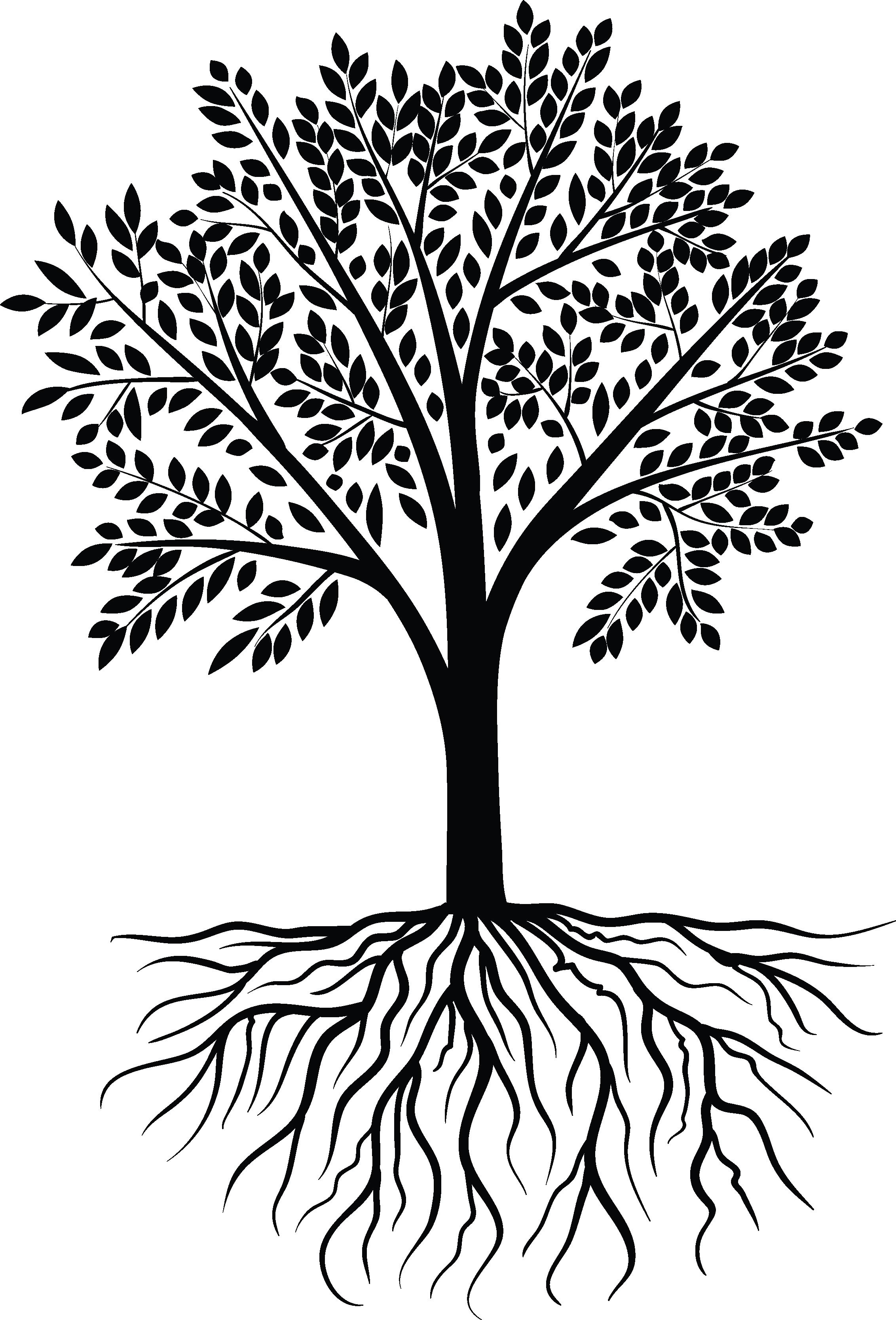Tree PNG Vector - 56478