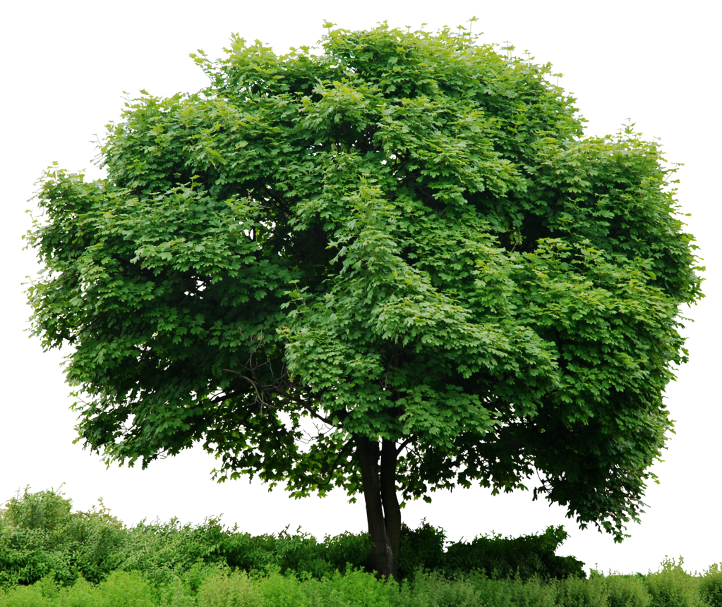 Trees PNG HD - 125371