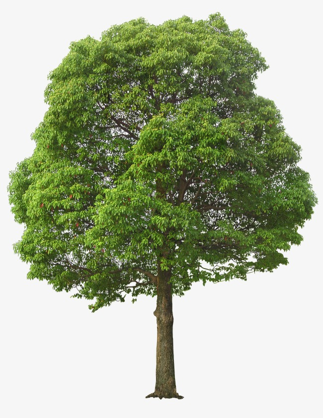 Trees PNG HD - 125369