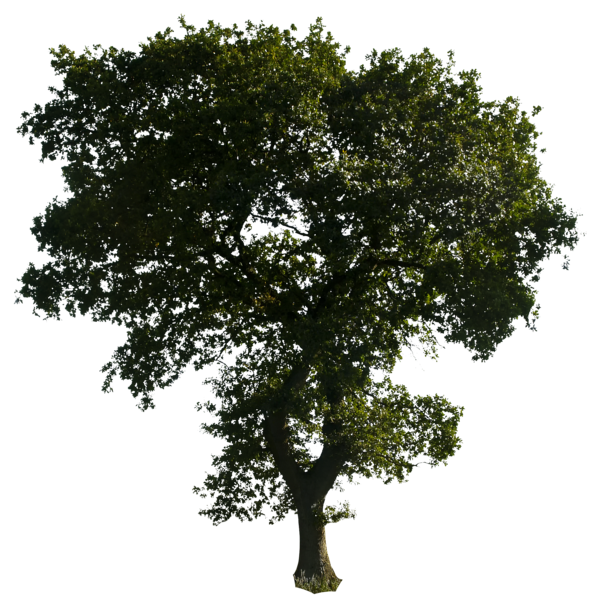 Trees PNG HD - 125372