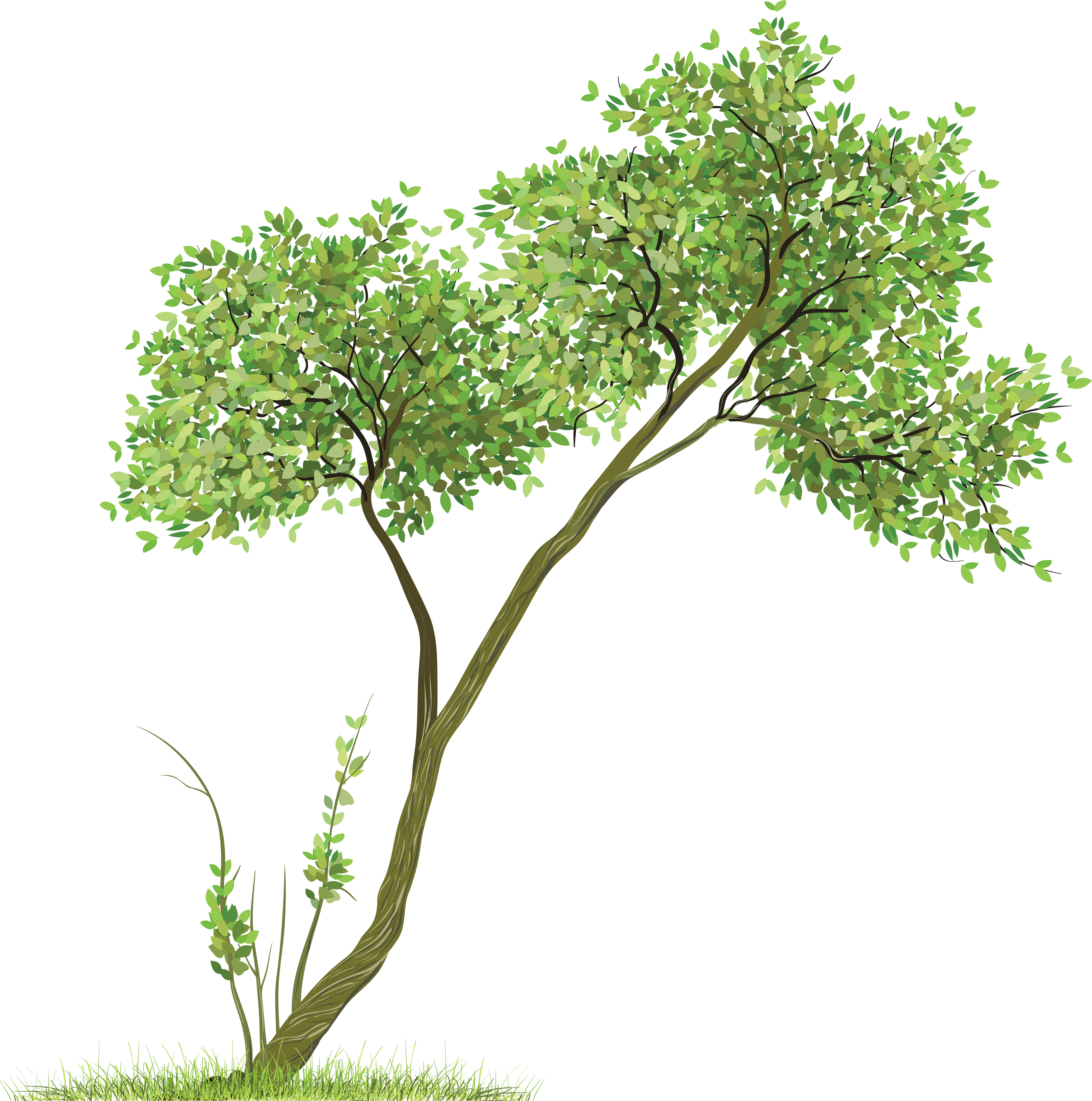Trees PNG HD - 125375