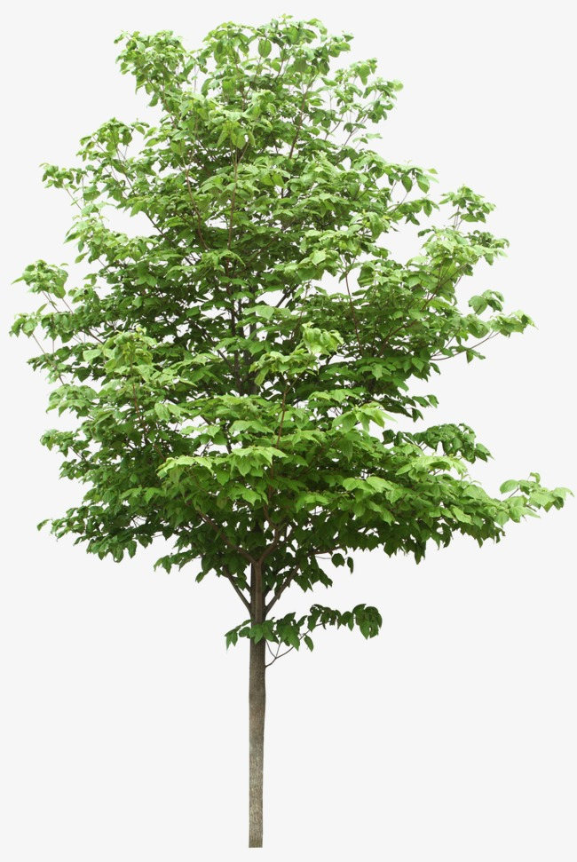 Trees PNG HD - 125367