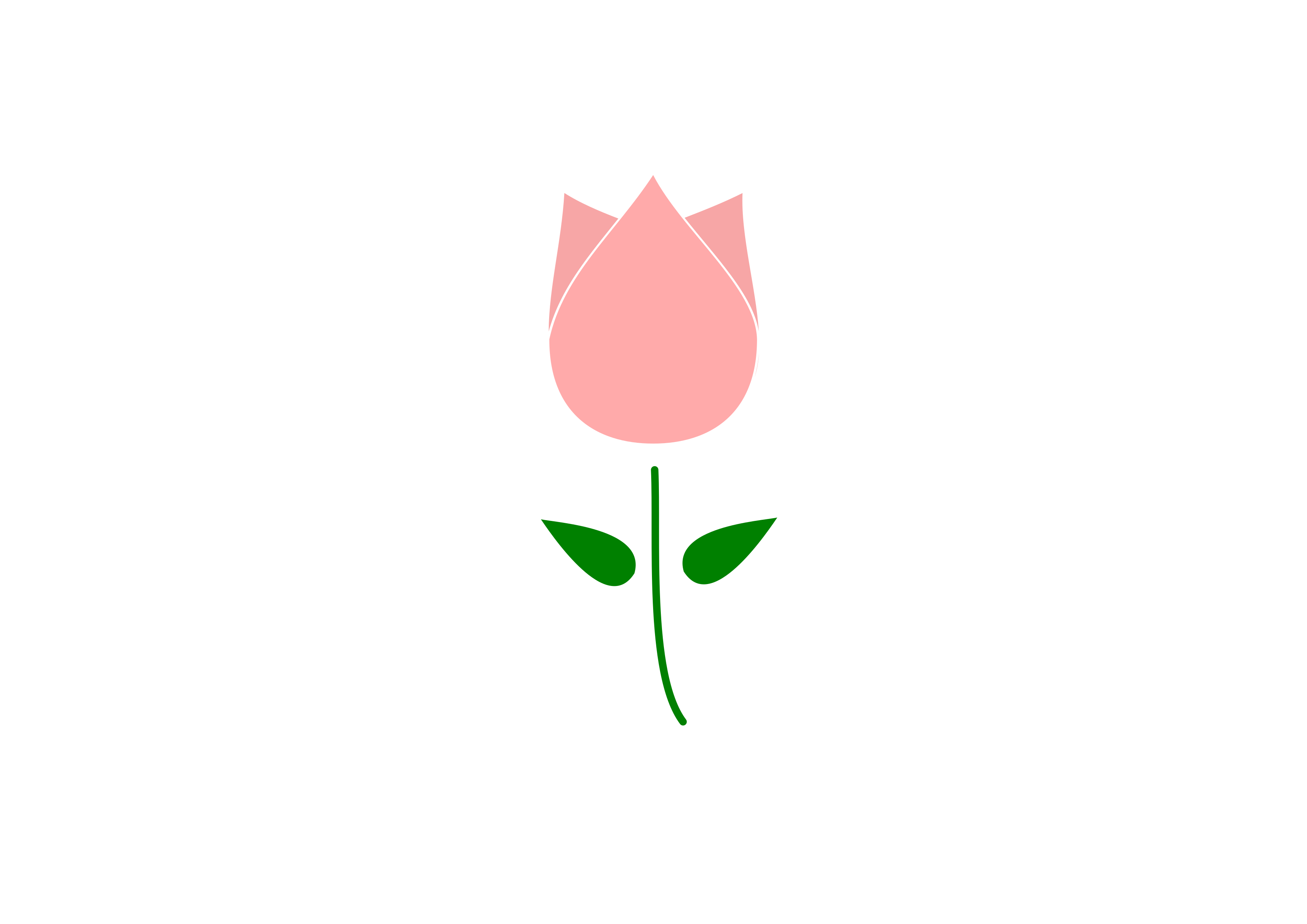 Tulip PNG Outline - 81454