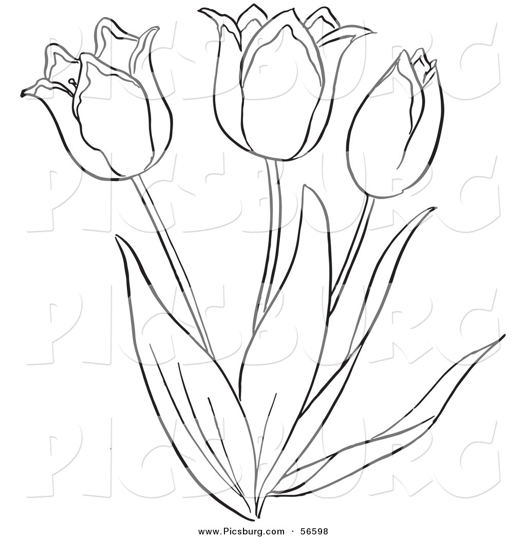 Tulip PNG Outline - 81458
